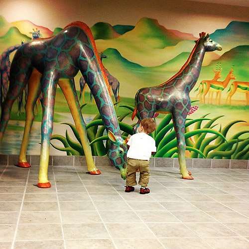 """Apollo looking at """"zebras"""" at Seattle Children's Hospital."""
