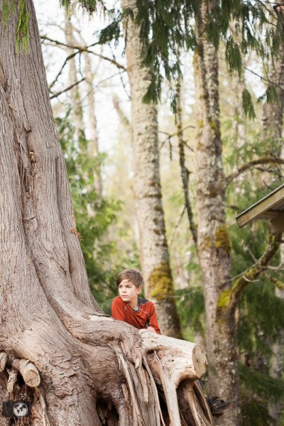 boy sitting in giant tree