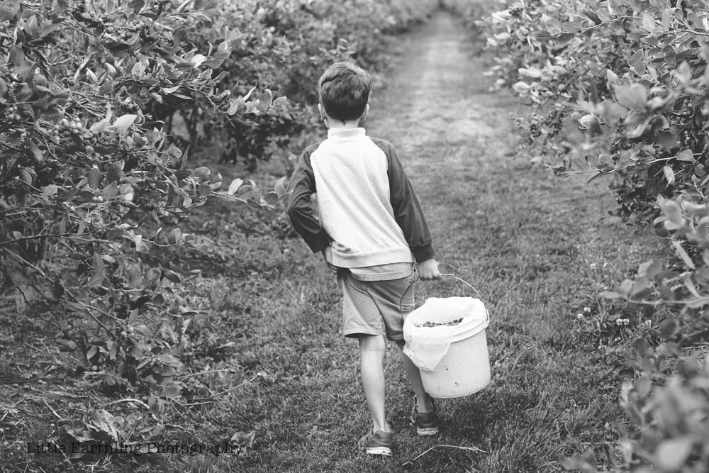 blueberry-picking-2229-2