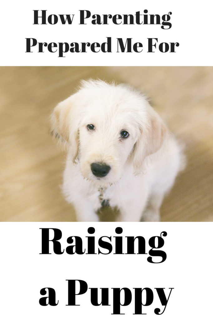 How parenting prepared me for raising a puppy.