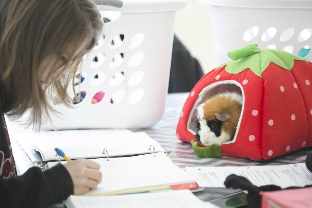 Rosetta Stone vs  Duolingo Review: Homeschooling a Foreign