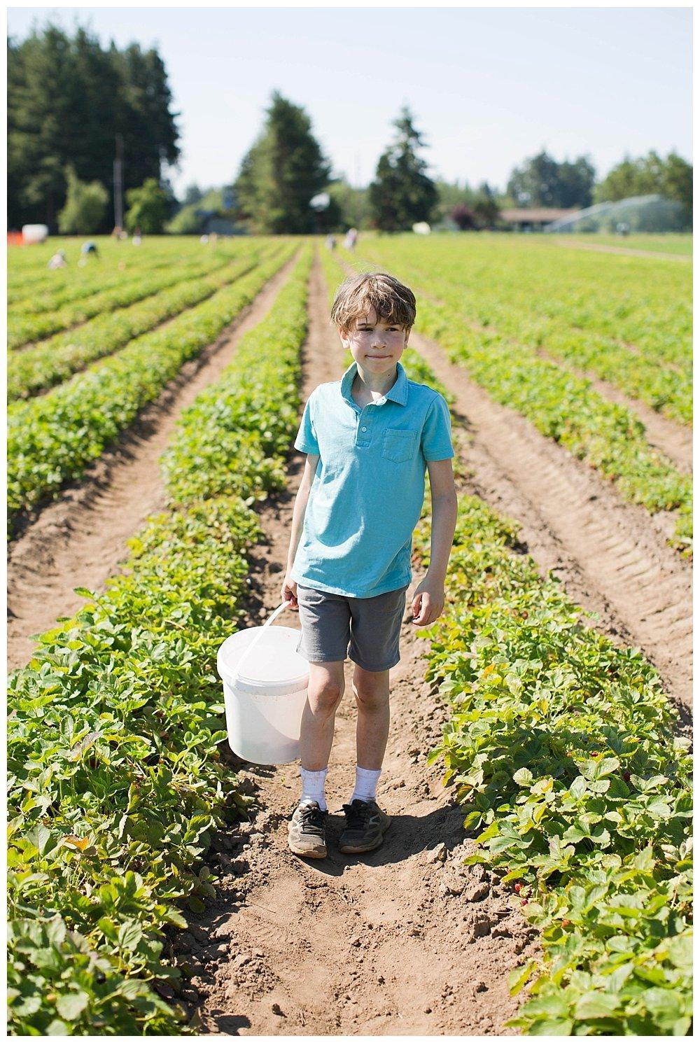 Apollo picking strawberries at the U-Pick strawberry farm.