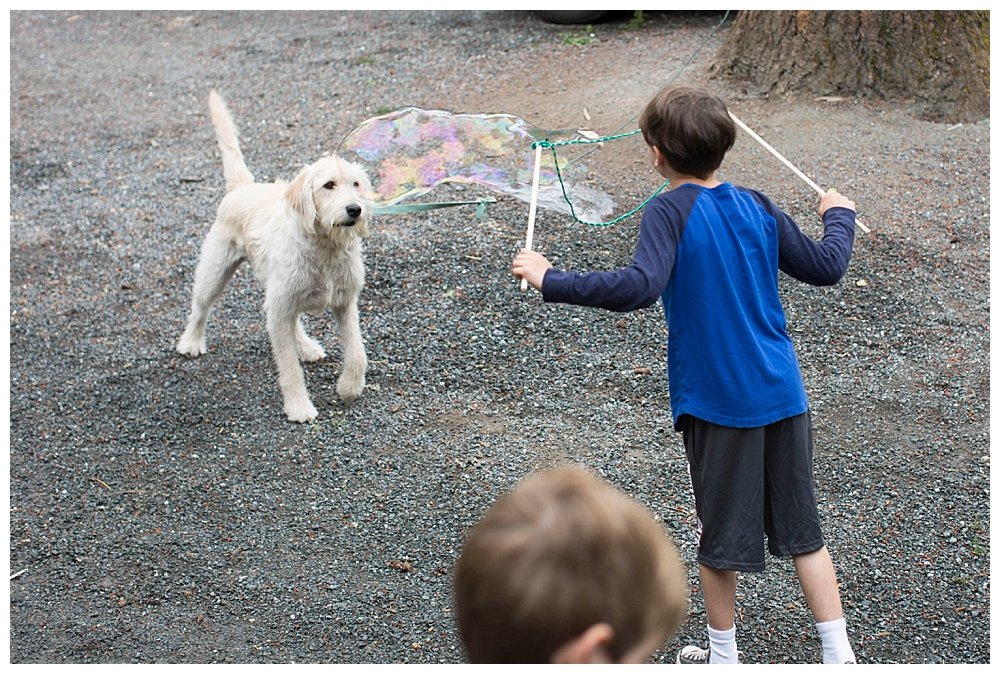 Boy blowing giant bubbles at dog.
