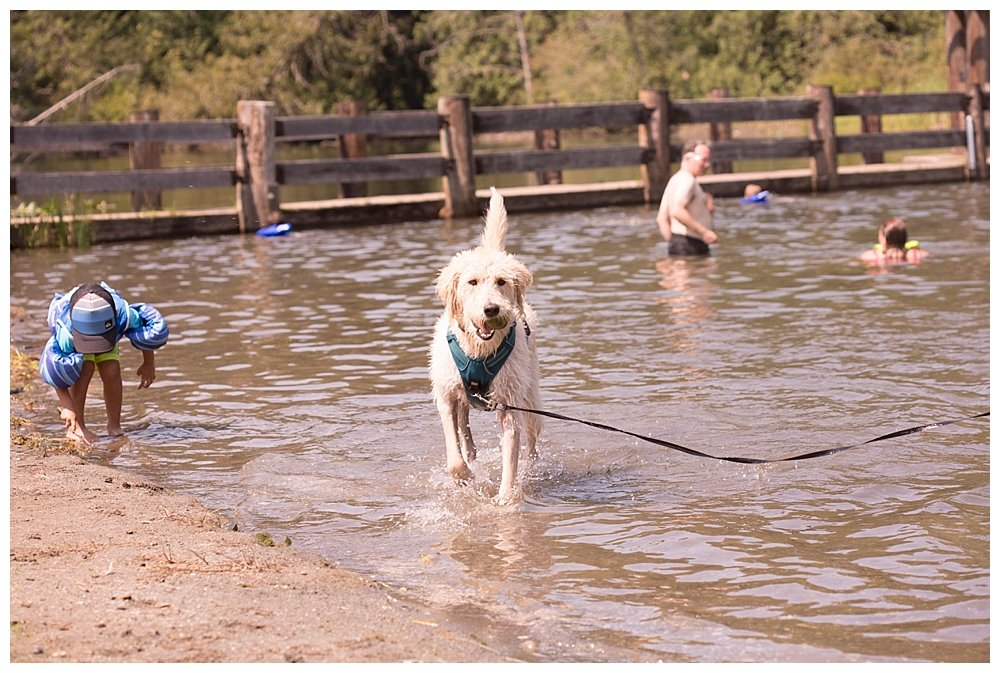 Frodo loves camping and Frodo loves swimming!