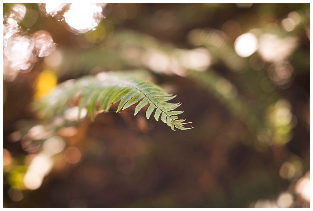 Fall hiking in the Pacific Northwest. Ferns.