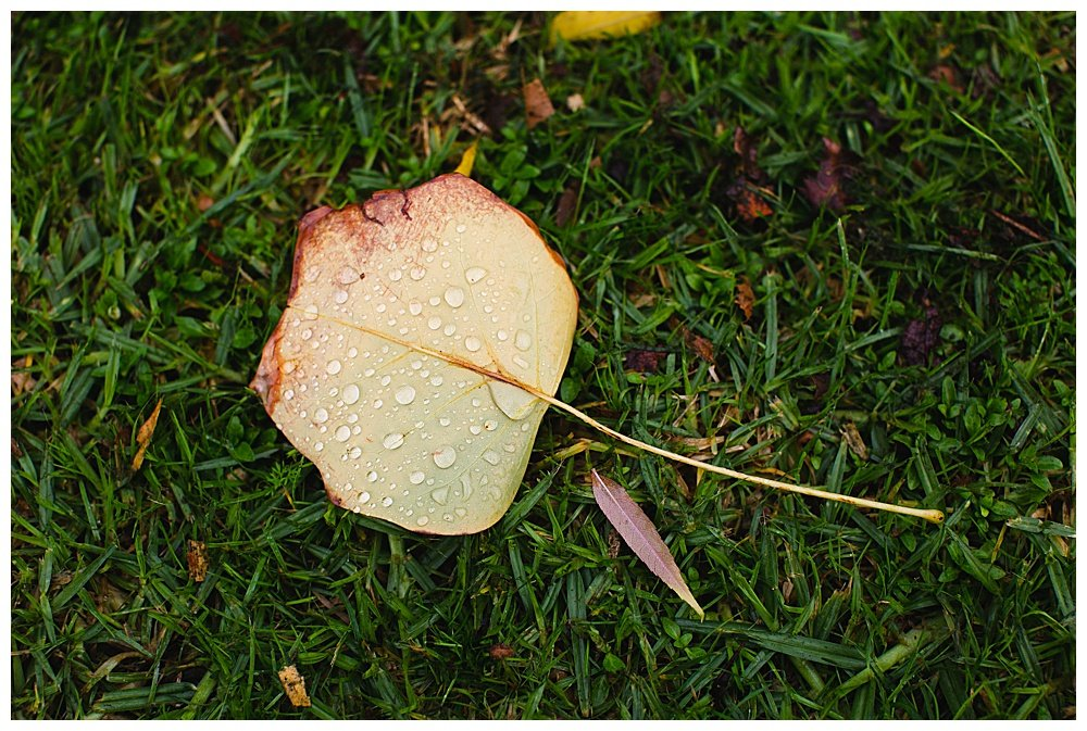Winter leaf in New Zealand
