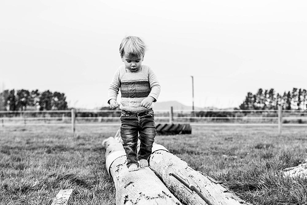 Percy walking along log in New Zealand.