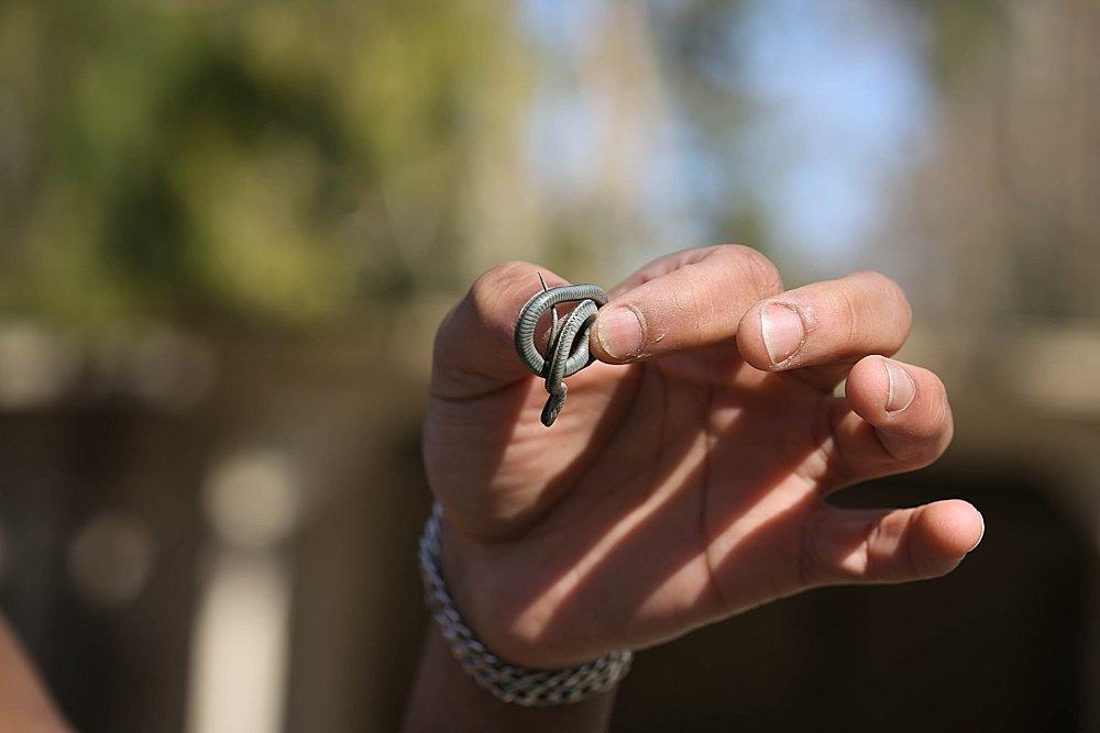 Mordecai holds a baby garter snake.