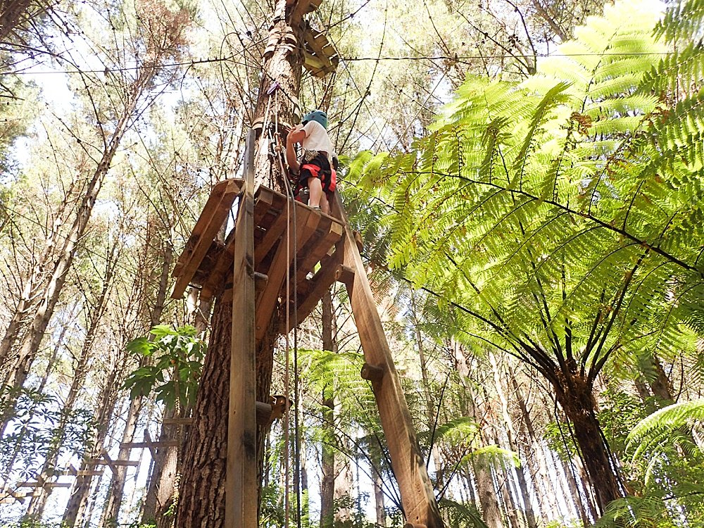 Adventure Forest in Whangarei, New Zealand.