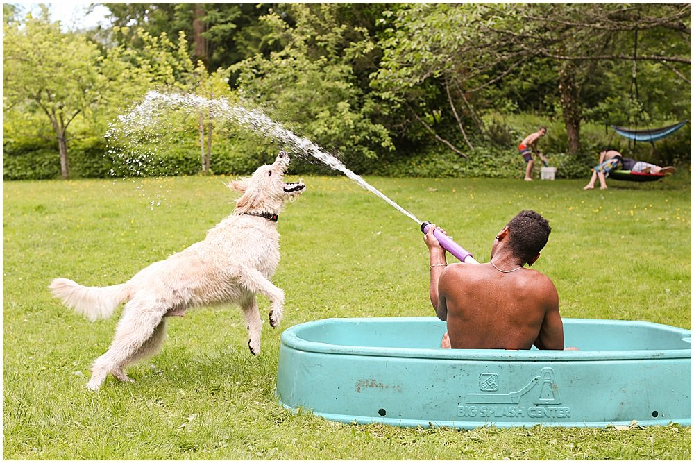 Frodo the labradoodle jumps for the water hose.